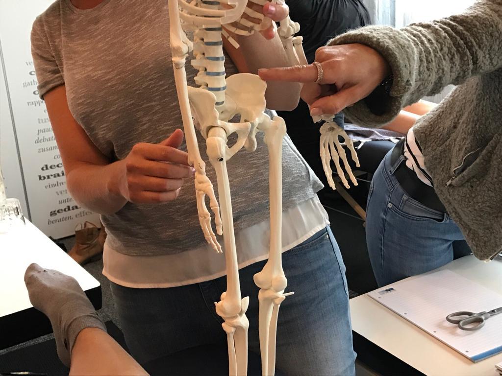 2-daagse training Manuele Technieken bij Bekkenpijn en Posturale Disfuncties FysioEffect Rijswijk
